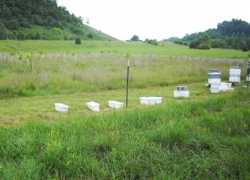 Bee hives managed by Tammy Horn at Chavies, Ky, a site that has been reforested